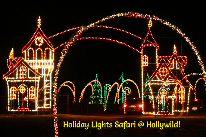 holiday lights safari 2017